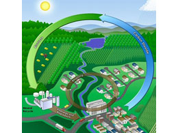 ciclo_biomasse