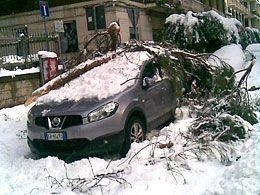 albero-su-auto