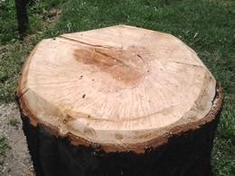 albero.tagliato