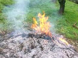 bruciatura-residui-vegetali