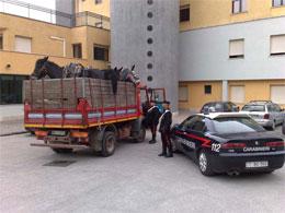 camion-animali
