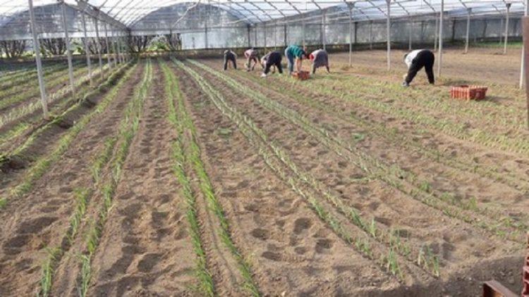 agricoltura montoro