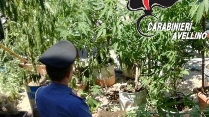 Maxi piantagione di marjiuana sequestrata a Nuoro: un arresto