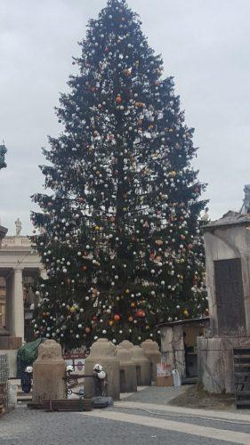albero piazza S. Pietro