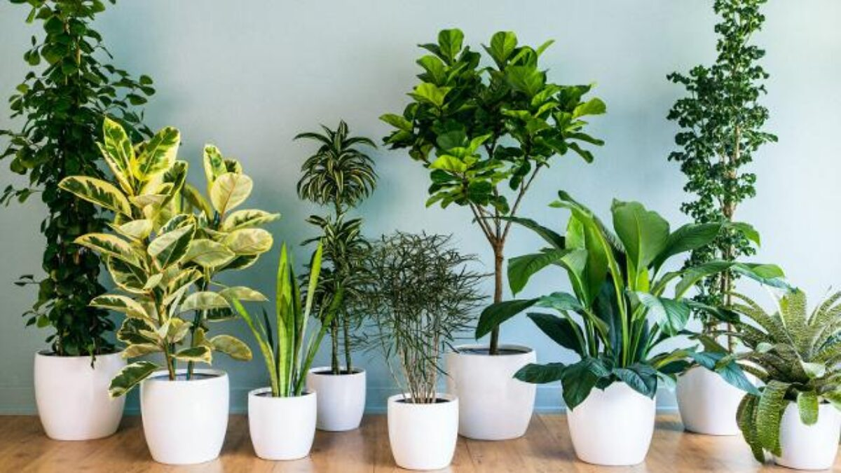Piante Da Arredo Appartamento inquinamento domestico: ecco le piante da tenere in casa per
