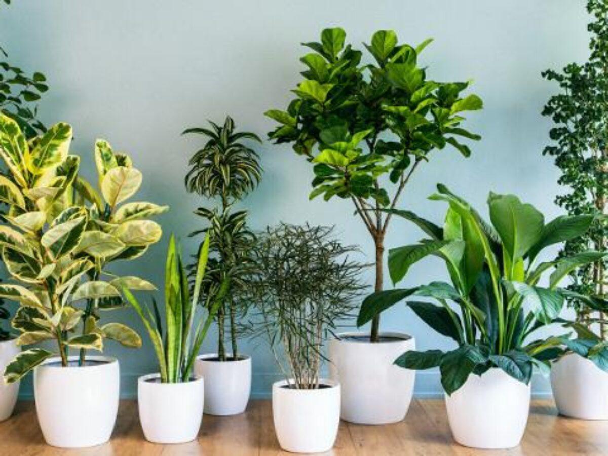 Piante Da Appartamento Per Purificare L Aria.Inquinamento Domestico Ecco Le Piante Da Tenere In Casa Per