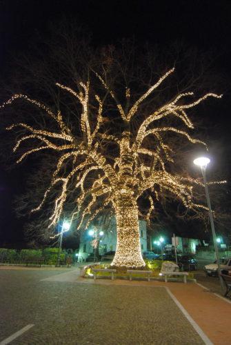 tigliosecolare_censimento_Nazionale_alberi_monuymentali