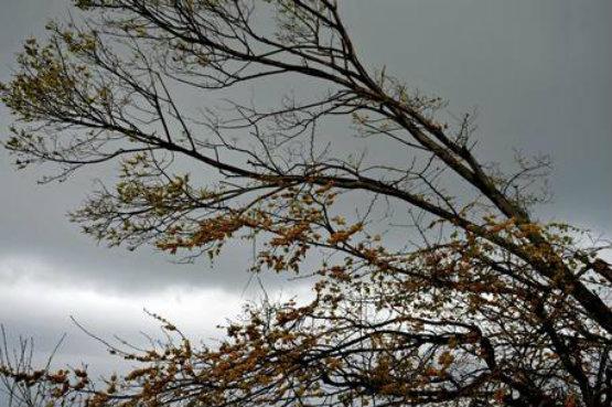 meteo vento forte