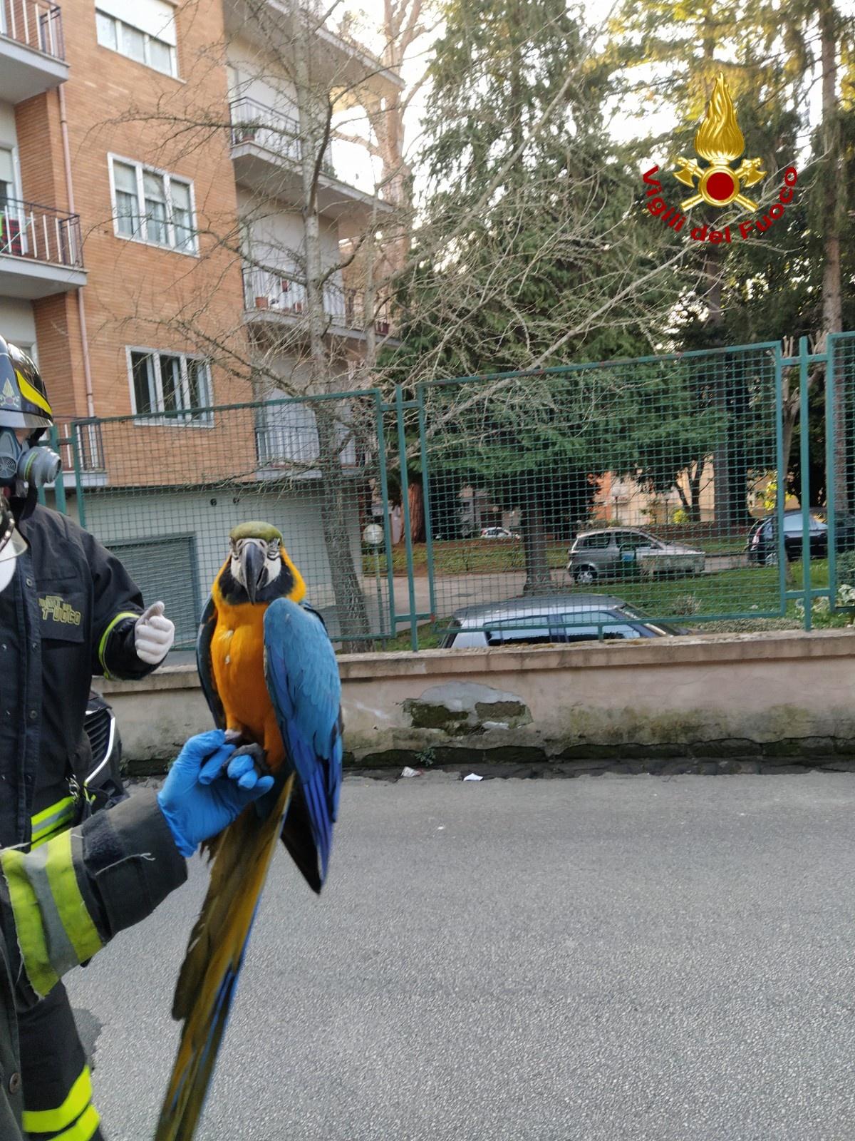 pappagallo-avellino-2