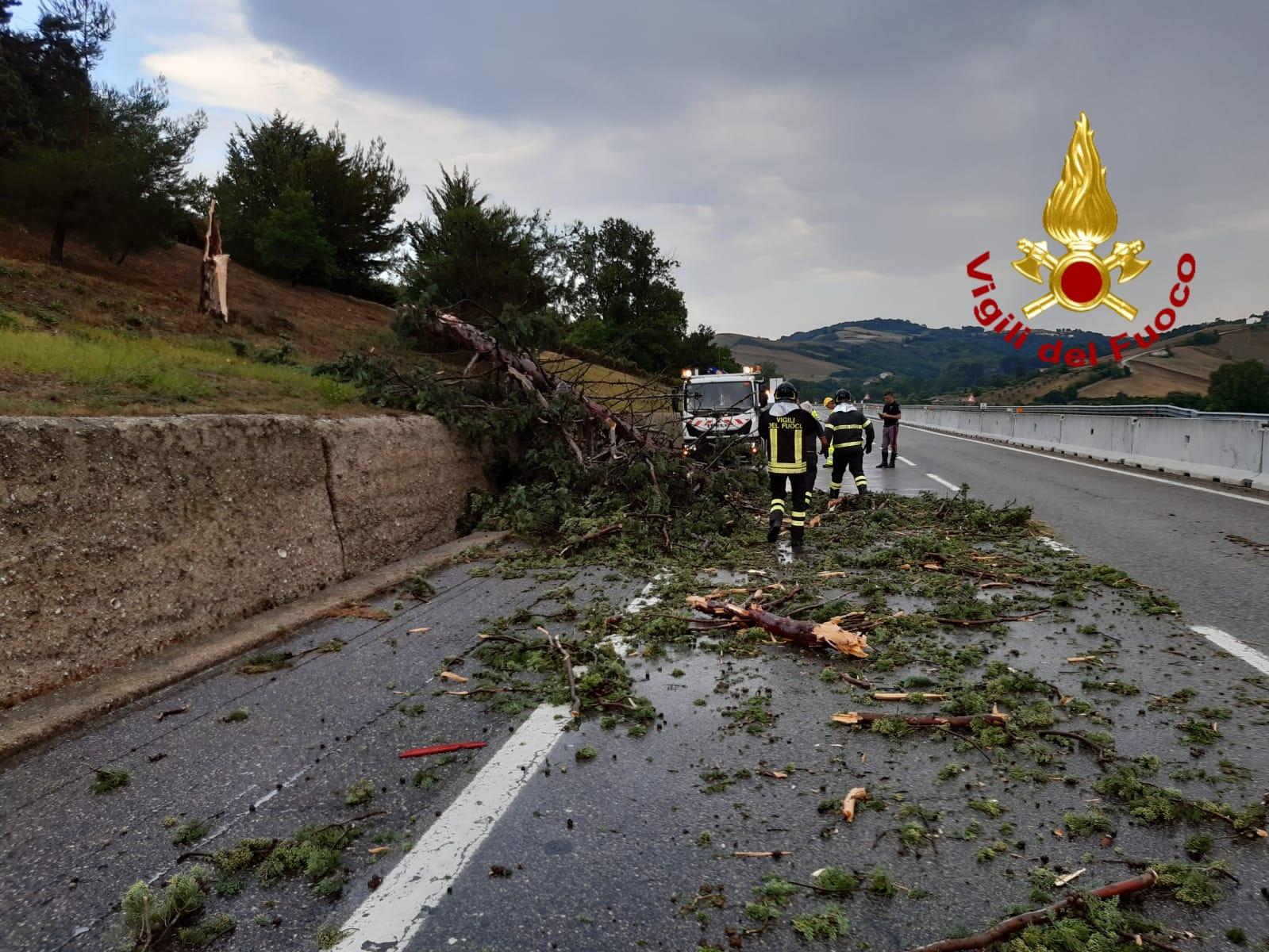 autostrada albero