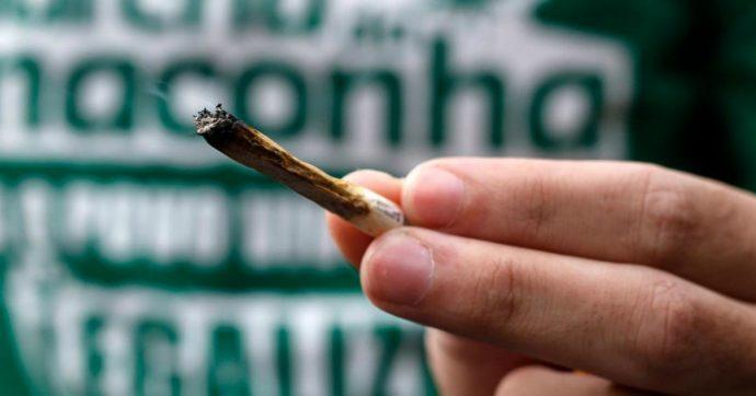 cannabis-1200-690×362